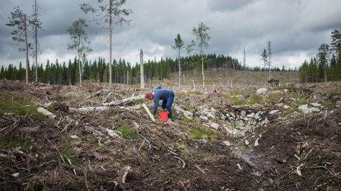 Desto treigare vi er til å kutte klimagassutsleppa, desto viktigare blir fjerning av karbondioksid frå atmosfæren med skogplanting, skriv Asbjørn Torvanger. Bildet: Skogplanting i Brumunddal.