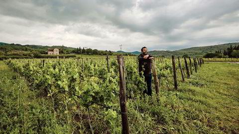 Apostolos Thymiopoulos' drueranker trives i Trilofos, et relativt kjølig området nord i Hellas som klimatisk kan sammenlignes med Bordeaux.