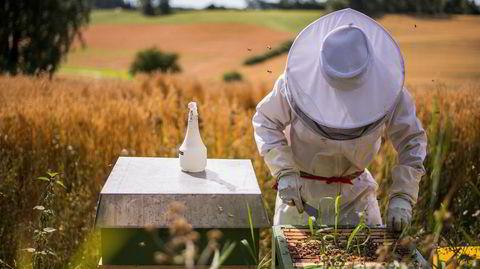 Bygdehonning. Anna Lundstein høster honning og leter i spenning etter sin første sesong som birøkter: Er det nok honning her?