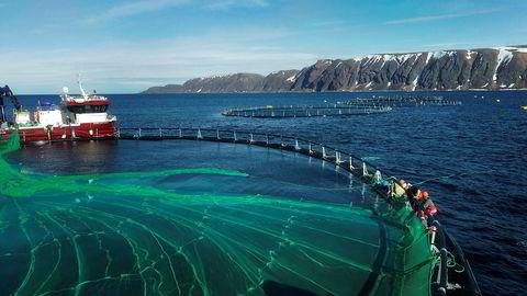 Ny rapport peker på poroblemer hvis norsk laksenæring skal vokse kraftig og bruke soya fra Brasil i fiskeforet. Bildet er fra SalMars anlegg i Syltefjorden i Båtsfjord.
