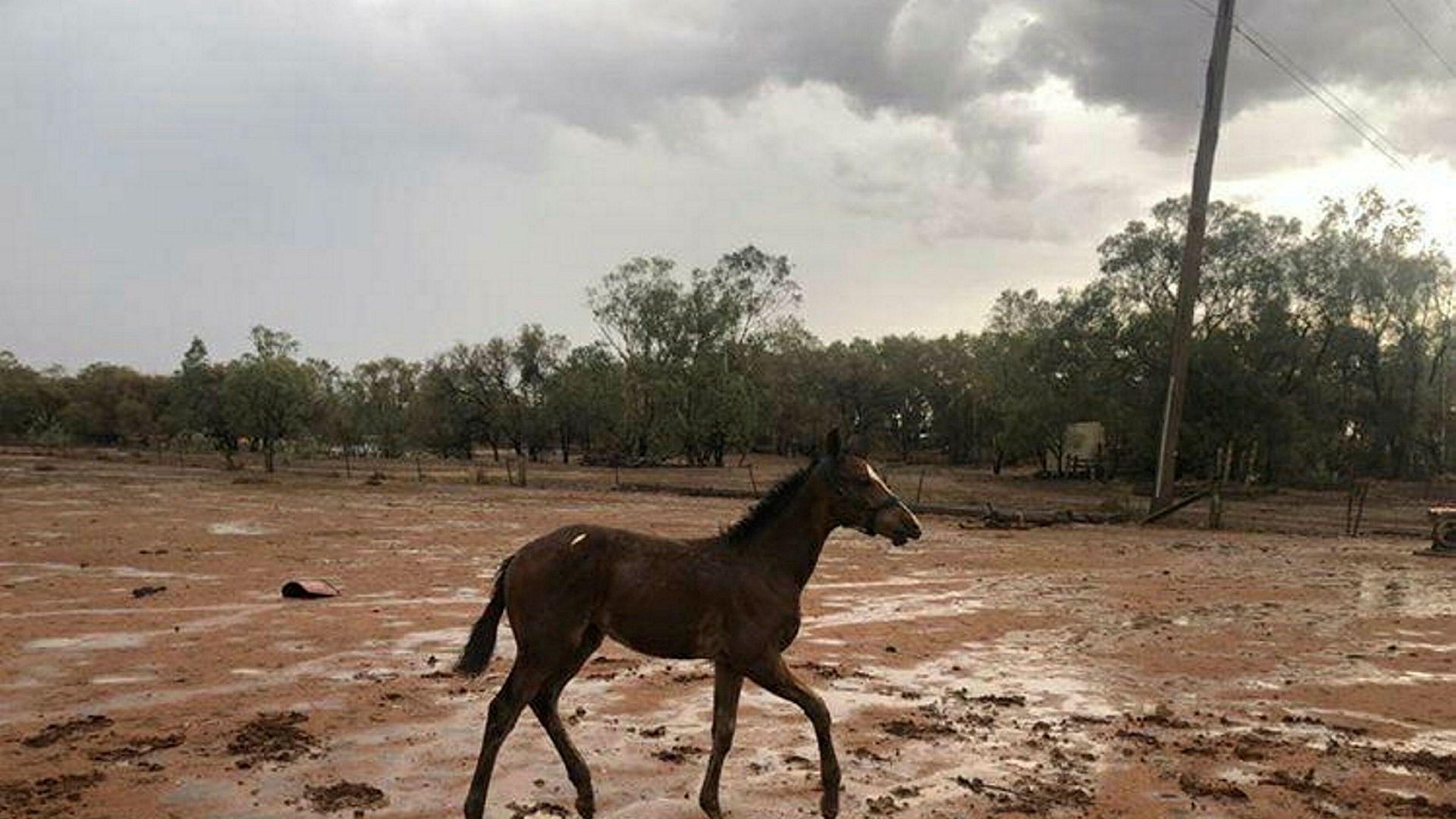 Store nedbørsmengder har ført til at en tredel av skogbrannene har blitt slukket de siste dagene i delstaten New South Wales i Australia.