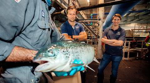 Atlantic Sapphire og gründer Johan Emil Andreassen (i midten) skal oppdrette laks på land i USA. Selskapsnavnet spiller på det safir-fargede blåskjæret langs ryggen på fisken. Finansdirektør Karl Øystein Øyehaug (til høyre) følger med mens en veterinær sjekker en laks.