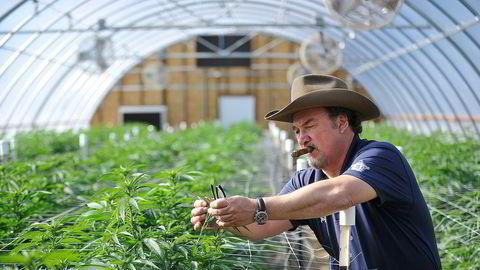 Skuespilleren Jim Belushi har sin egen helt lovlige marihuanafarm på vel to mål ved Eagle Point i Oregon, som var blant de første delstatene som legaliserte cannabis i 2014.