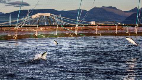 Oppdretterne kan erstatte problematiske råvarer som brasiliansk soya med norske alternativer, skriver Veera Mo.