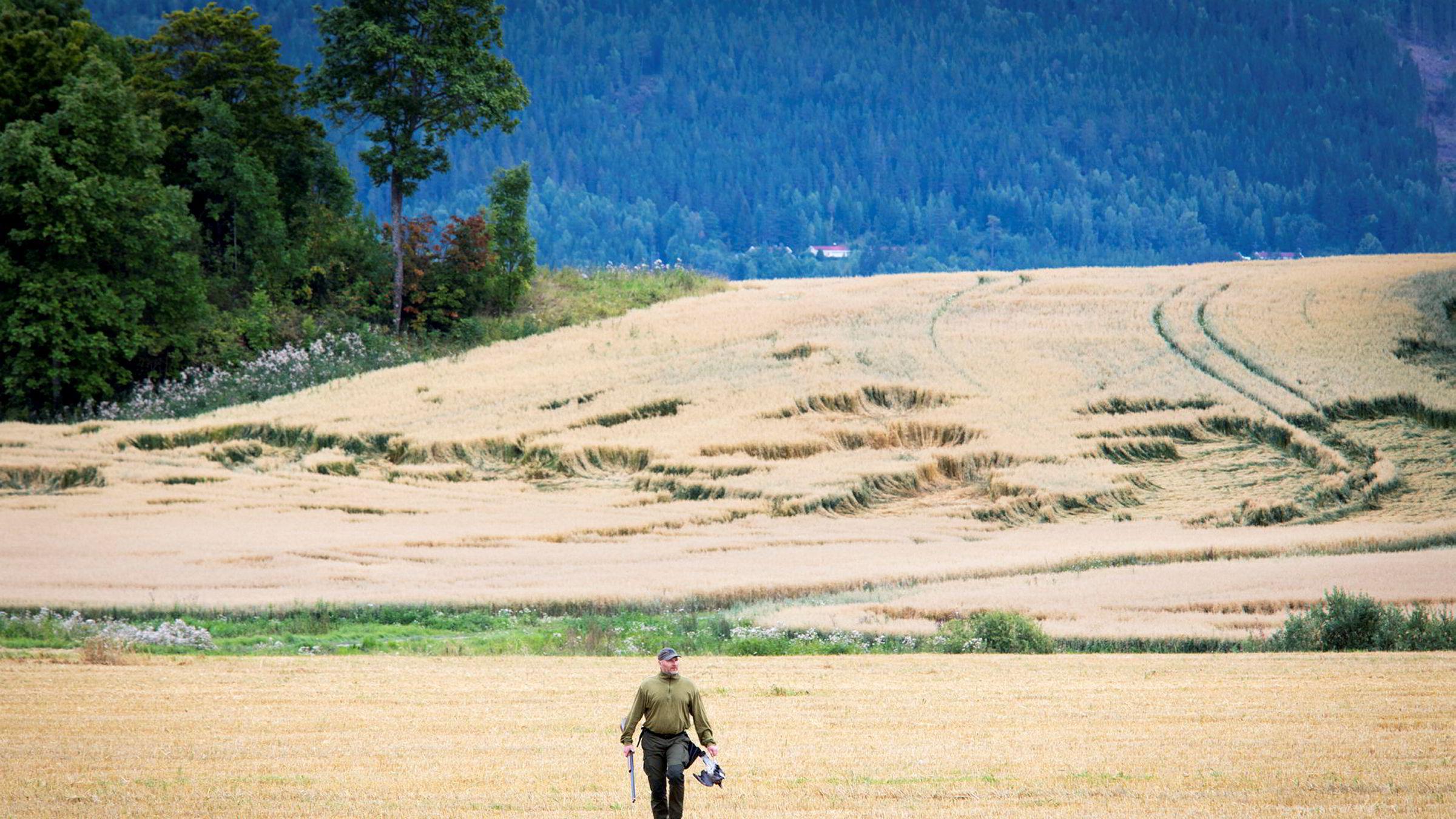 Elling Tryterud henter dagens andre duefangst ute på jordene ved Steinsletta. Når treskingen er i gang er timingen perfekt for duejakt. Duene kan gjøre skade på kornet som ennå ikke er slått og spesielt på «legden», der kornet har lagt seg i bakgrunnen.