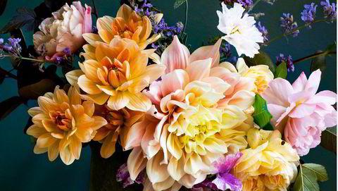Blomsterprakt. Få blomster gjør så mye ut av seg både i hagen og i vasen som georginene. Her er georginene Apricot Desire og Breakout sammen med rose, erteblomster, cosmos, kattemynte og klokkeranke.