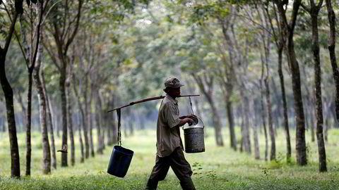 Innhøstingen av lateks fra gummitrær i Sørøst-Asia gjøres manuelt. Koronapandemien har ført til en kraftig økning i etterspørselen etter lateks engangshansker. Aksjekursene har fulgt etter.