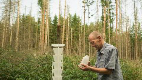 Klimakrisen har nådd Europas siste urskog