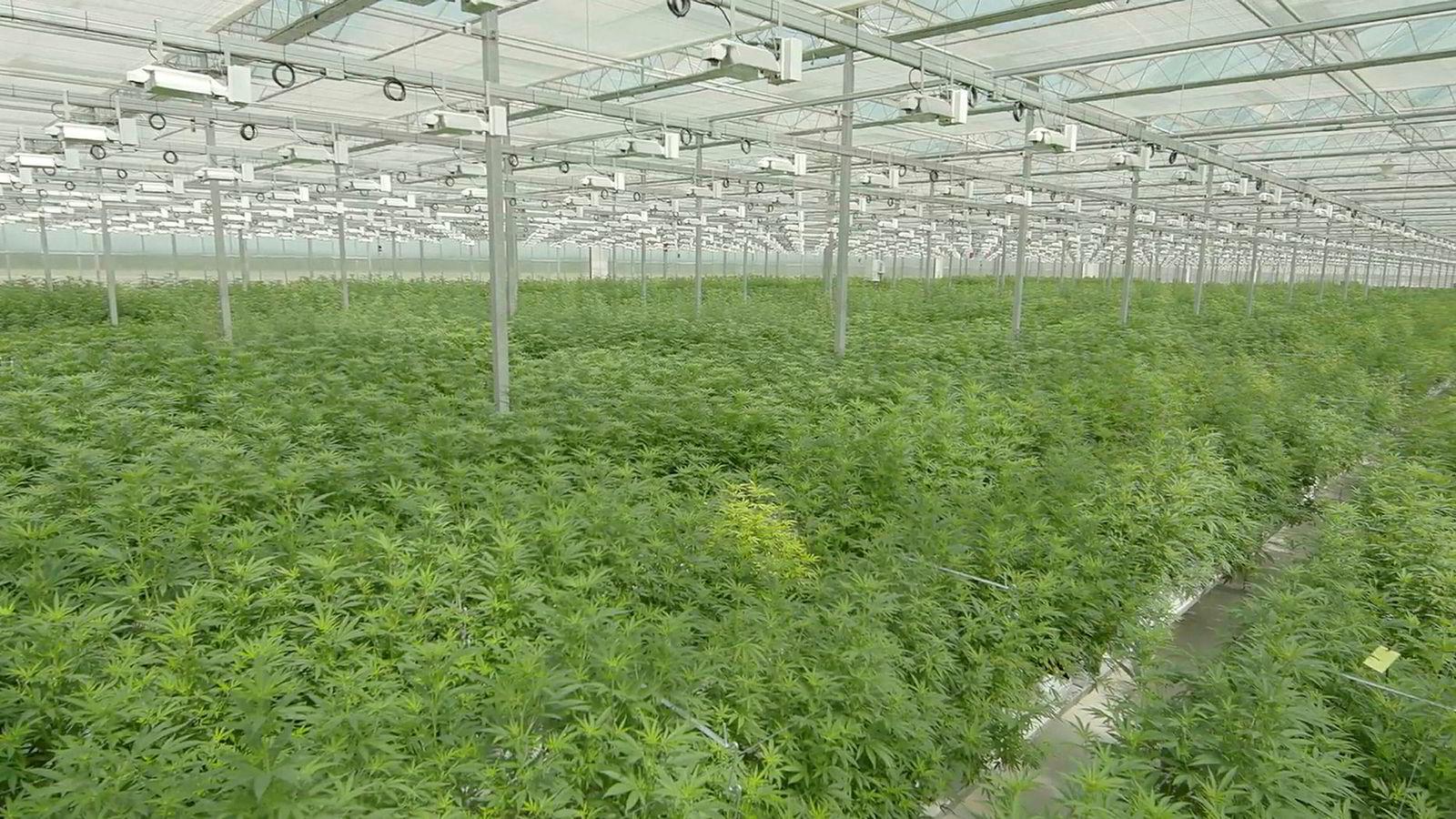 Bildet er fra Tilrays datterselskap High Park Farms drivhus i Enniskillen, Canada.