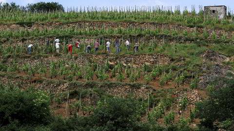 Vinmarkene i Côte-Rôtie er et imponerende skue med vinterrasser som klamrer seg fast til de bratte skråningene.