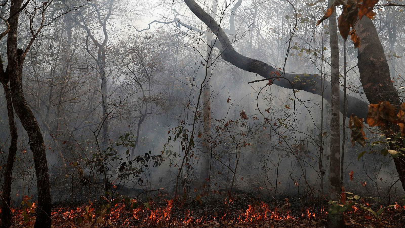 Massive skogbranner herjer i Amazonas i Brasil. Flammene har også spredt seg til Bolivia, hvor over én millioner hektar har brent ned.