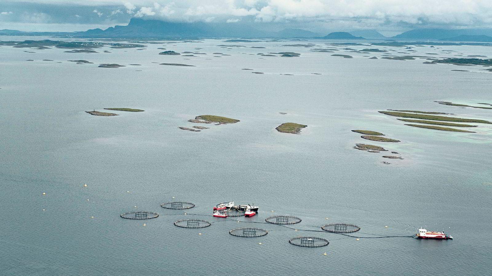 Fiskeri og akvakultur er den ene av de fire havbaserte næringene som virkelig er en suksess over tid Her fra Skogsholmen på Helgelandskysten.