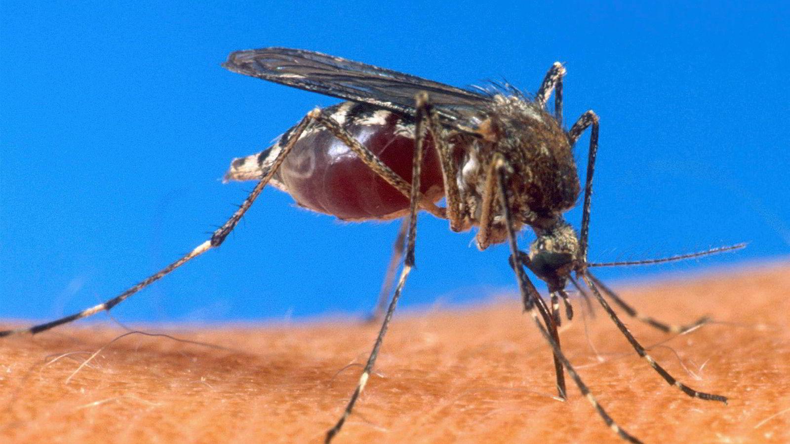 Ekspertene frykter at multiresistent malaria som nå sprer seg i Sørøst-Asia skal spre seg videre til Afrika.