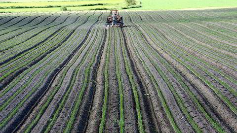 Åker. Traktor fra jordene utenfor Horten. - Maten vi får fra konvensjonelt landbruk er helt trygg, sier Birger Svihus, forsker ved NBMU.
