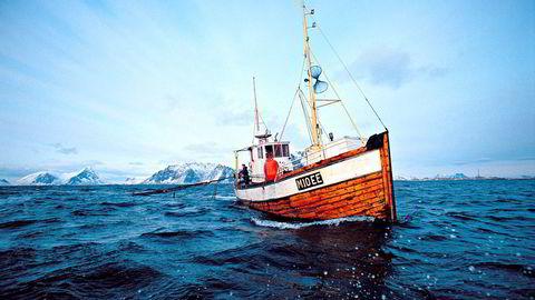 Nå fiskes det etter skrei i nord. Foto: