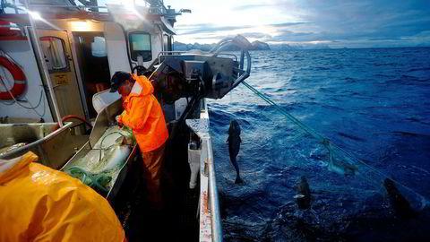Det er blitt flere fartøy og flere fiskere i Norge det siste året.