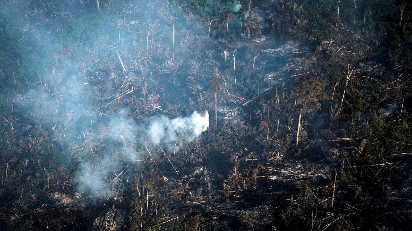 Branner i Brasils skoger skaper bekymring for både klima og naturmangfold og strid i EU og Norge om nye frihandelsavtaler.