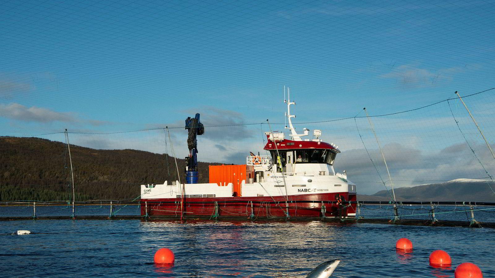 Under snøkledde fjell, der blikkstille Gisundet møter Malangsfjorden, ligger den rødmalte servicebåten «Gyme» på innsiden av Nord-Senja og steller med Salmars oppdrettsanlegg Skårliodden.