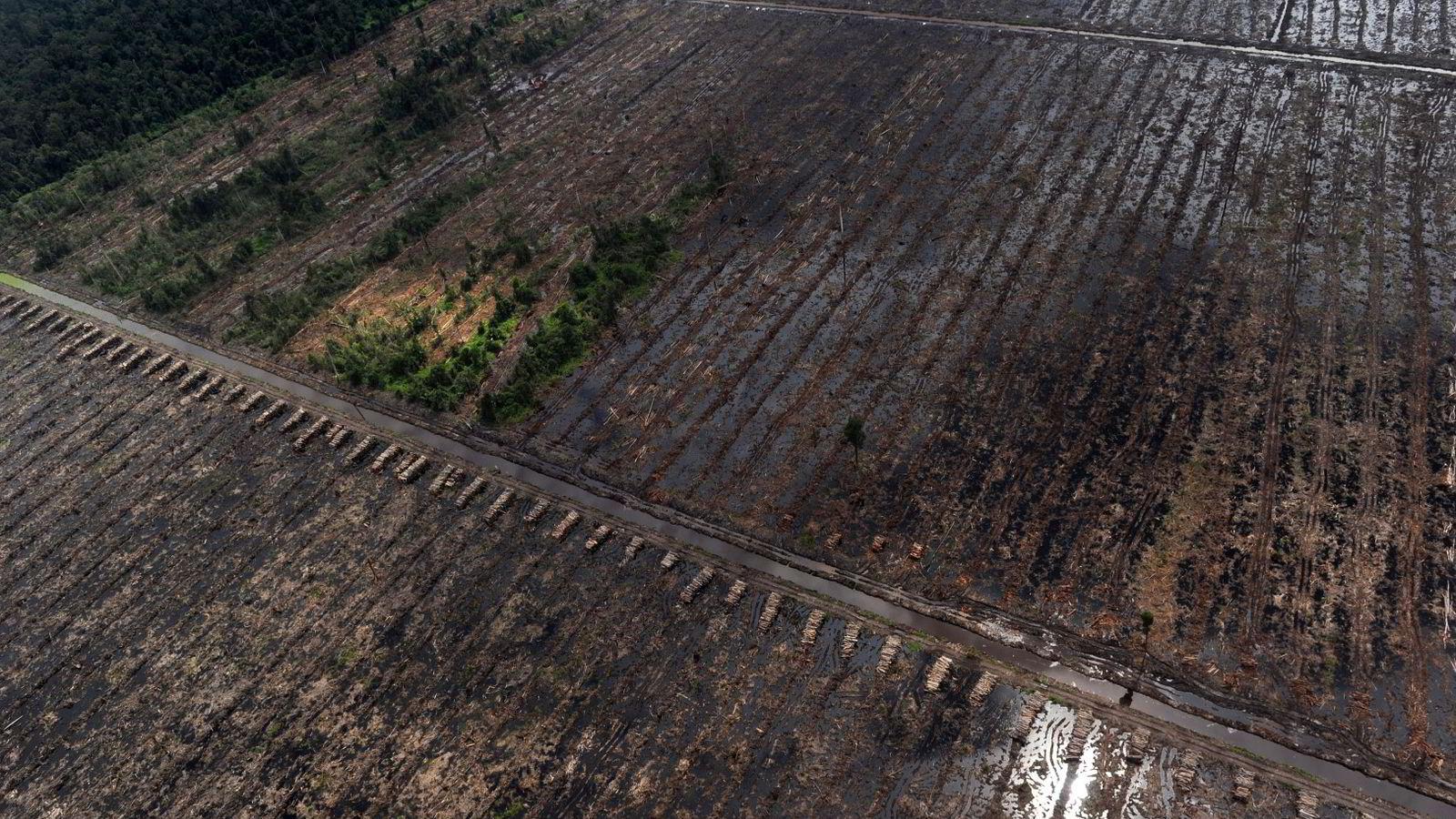 EU får kritikk for sin bruk av biodrivstoff. Bildet viser stabler med tømmer i ødelagt regnskog på Sumatra i Indonesia. Da bildet ble tatt for fire år siden forsvant det ifølge eksperter regnskog tilsvarende 300 fotballbaner i timen. Foto: Romeo Gacad/AFP Photo/NTB scanpix