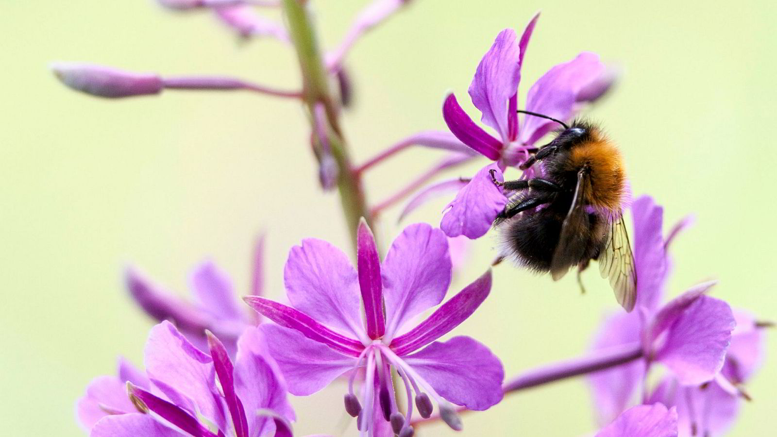 Forskere advarer om dramatisk utvikling for insekter verden rundt.