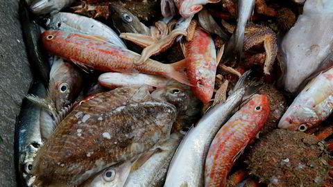 En tredel av all fisk som fanges blir kastet.