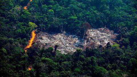 Norge fører en aktiv politikk for å påvirke Brasil til å endre den kursen landet nå har lagt seg på, både gjennom regnskogssamarbeidet, i samarbeid med andre land og sammen med internasjonale organisasjoner, skriver artikkelforfatteren.