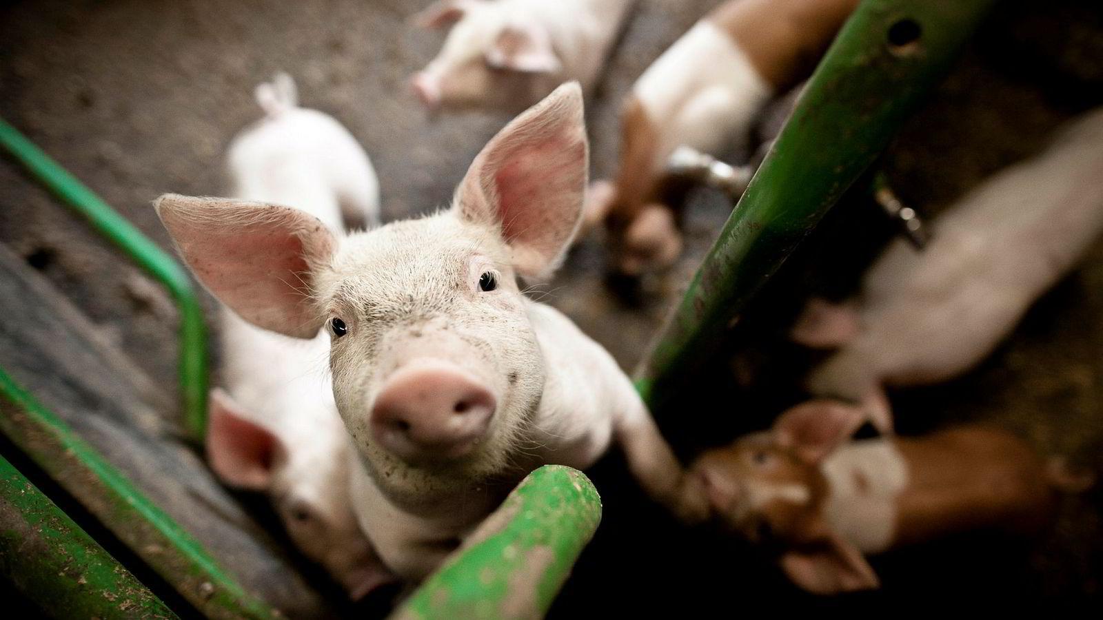 Det er nesten enda mer overraskende å se hvor provosert folk fortsatt blir når fokuset rettes mot dyrevern og etikk.