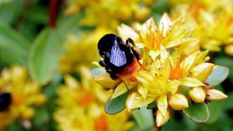 Omfattende insektsdød er en stadig større bekymring verden rundt.