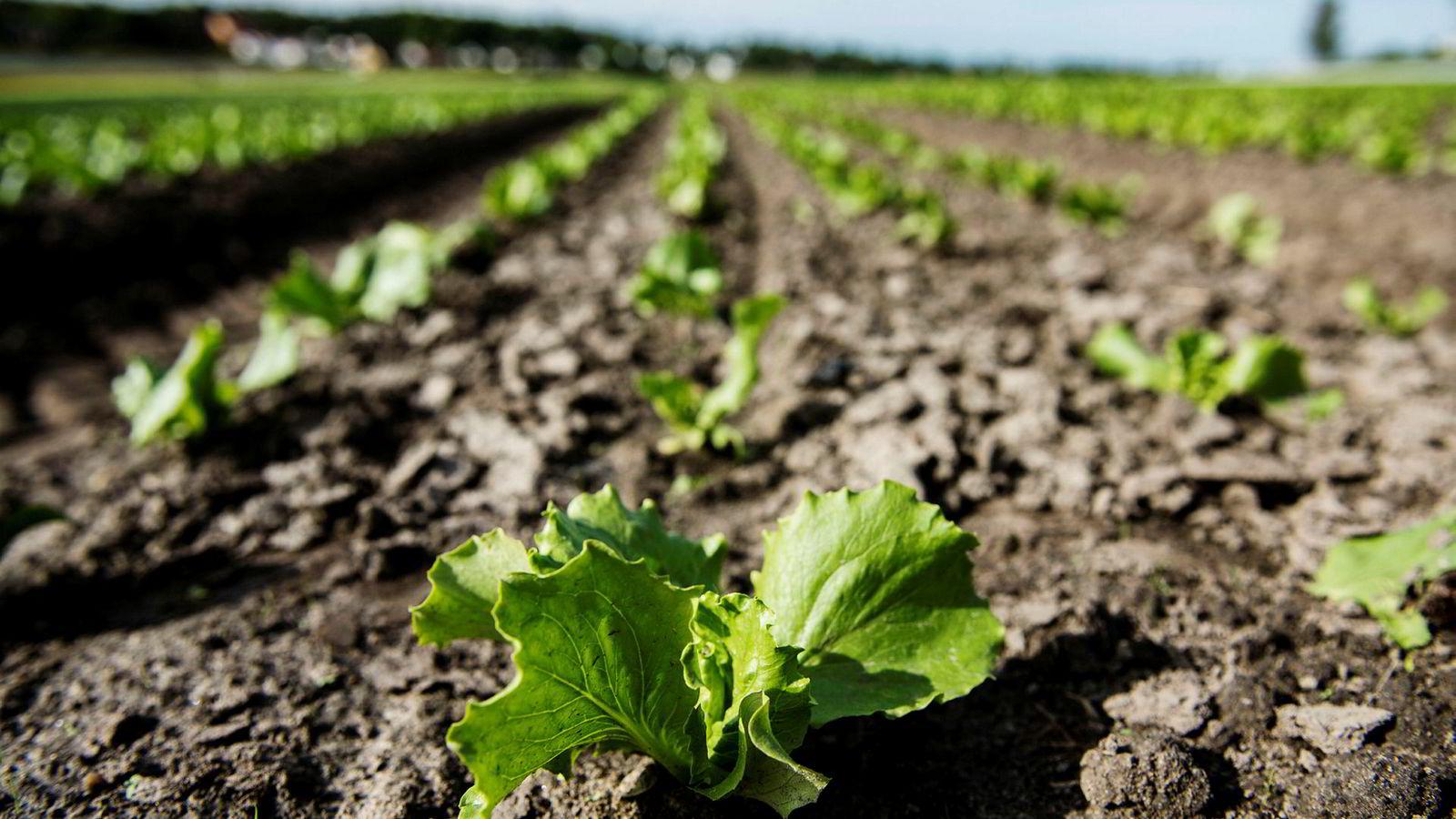 Overgangen til et mer bærekraftig landbruk må skje gradvis gjennom endringer i hele matkjeden, fra jord til bord – og tilbake til jord, skriver artikkelforfatteren.