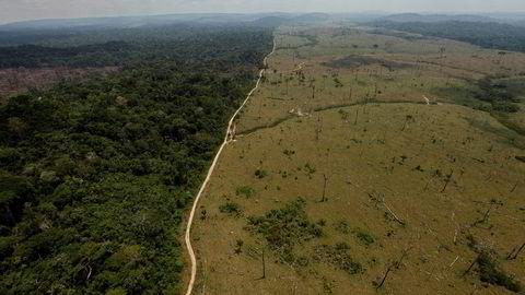 Avskogingen i regnskogen i Brasil øker igjen.