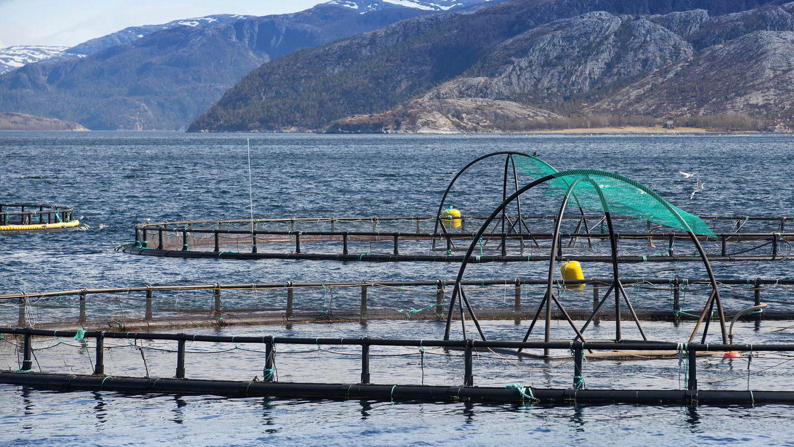 Produksjon av laks i åpne merder er blant de absolutt mest miljøvennlige formene for matproduksjon vi har, og det burde strengt tatt være en kilde til stolthet for norske politikere.