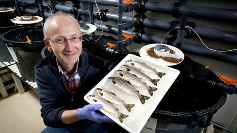 Seniorforsker Helge Tveiten har ledet Nofimas forskningsarbeid med steril laks. Her holder Tveiten frem fire sterile laks og to kontrollfisk. De sterile fiskene skiller seg ikke ut, men mangler kjønnsceller. Foto: Ole Åsheim
