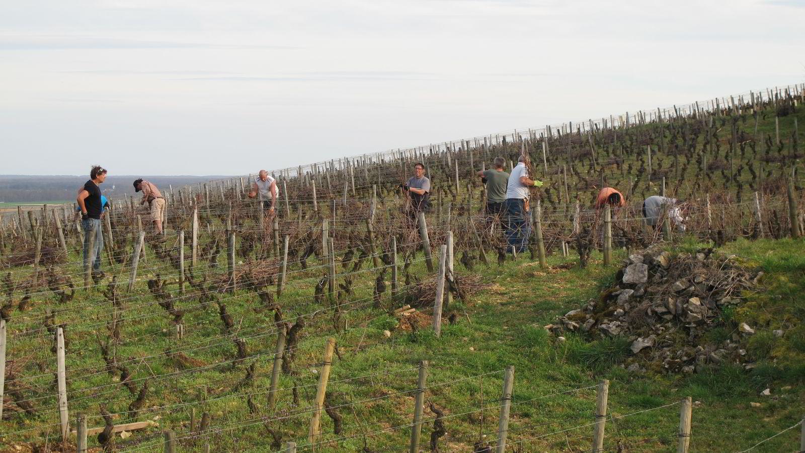 Vinmarksarbeidere i Vosne-Romanée
