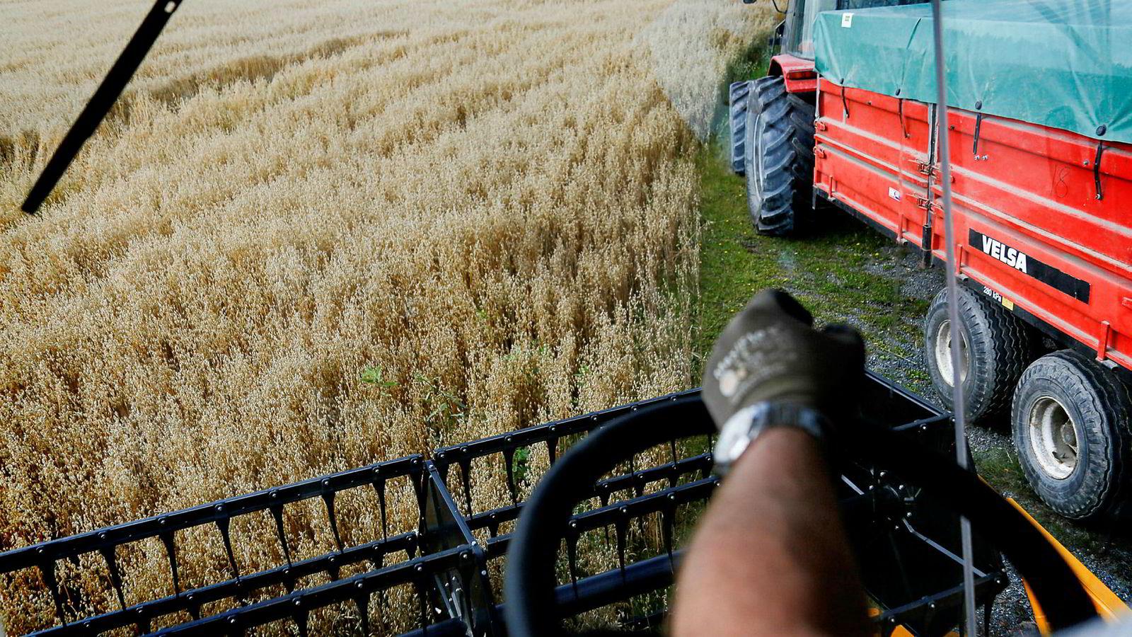 Gjennomsnittsbonden kan vente seg en inntektsnedgang i forbindelse med det kommende landbruksoppgjøret.