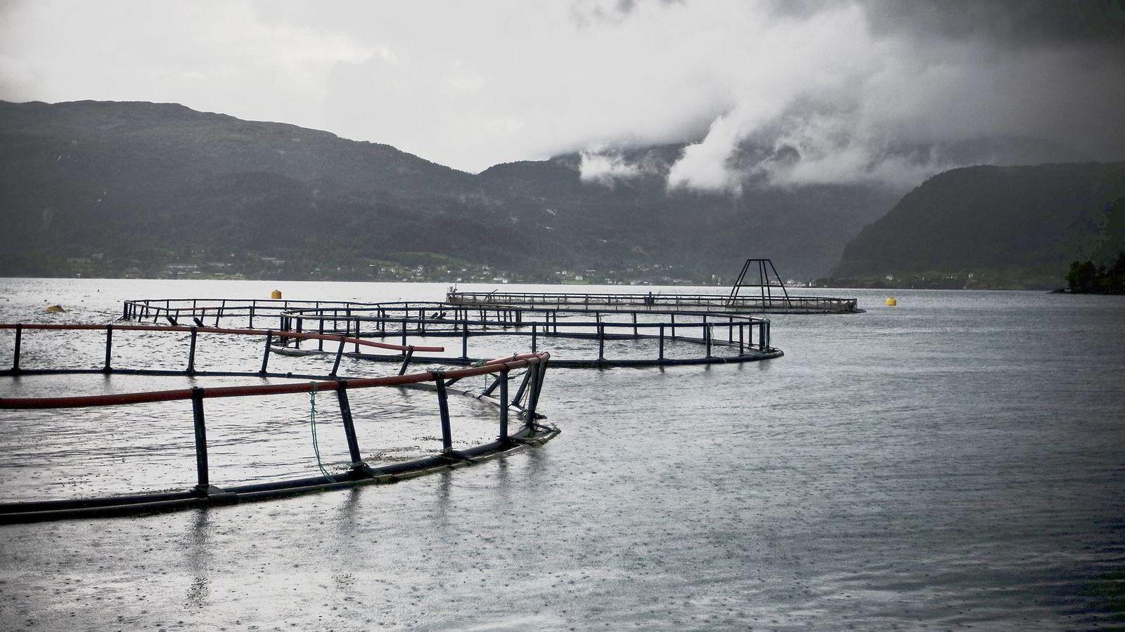 FORMUESKATTEN: Faktum er at formuesskatten omfatter urealiserte verdier som fisken som svømmer i merdene, trailerne som kjører på veiene og teknologien og kunnskapen i de ansattes hoder, ifølge artikkelforfatteren. Illustrasjonsfoto: Eivind Senneset