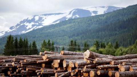 Hva kan skogbruksnæringen selv bidra med da? Først og fremst sitter vi på en fantastisk og for lite utnyttet råvarebase. Kombinert med gode logistikkløsninger og forutsigbare leveranser er dette et avgjørende bidrag til ny industrietablering, skriver artikkelforfatteren. Foto: Javad Parsa