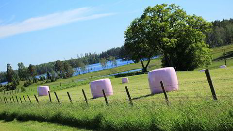 Deler av inntektene fra salget av plast til rosa rundballer i år, gikk til Brystkreftforeningen. Foto: Trioplast