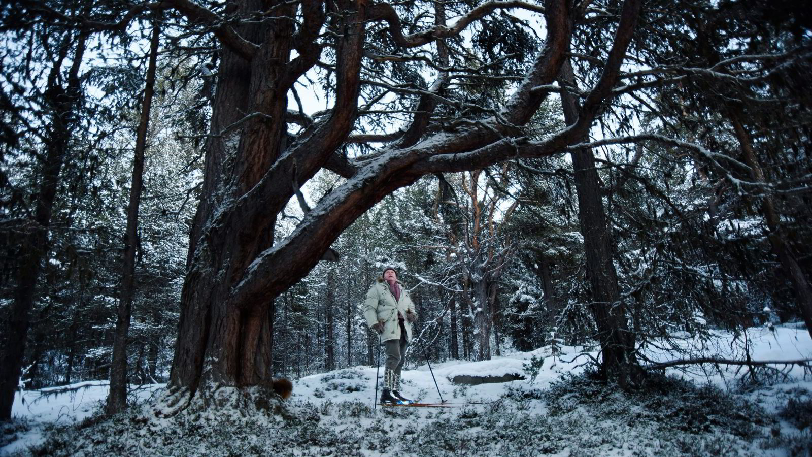 Petter Olsen har sørget for at 2,6 kvadratkilometer med skog i Vågå ikke blir hugget de neste 25 årene. Det kostet ham tre millioner kroner.