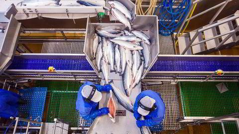 Lerøy kastes ut av DNB Markets' portefølje. Her fra lakseselskapets slakteri på Skjervøy i Nord-Troms. Foto: Marius Fiskum