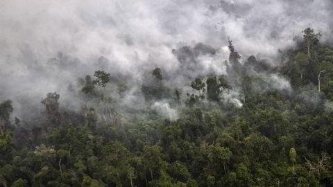 Enorme ulovlig anlagte skogbranner i regnskogen i Indonesia skaper luftforurensning flere steder i Asia. Foto: Regina Safri/Antara Foto/Reuters/NTB scanpix