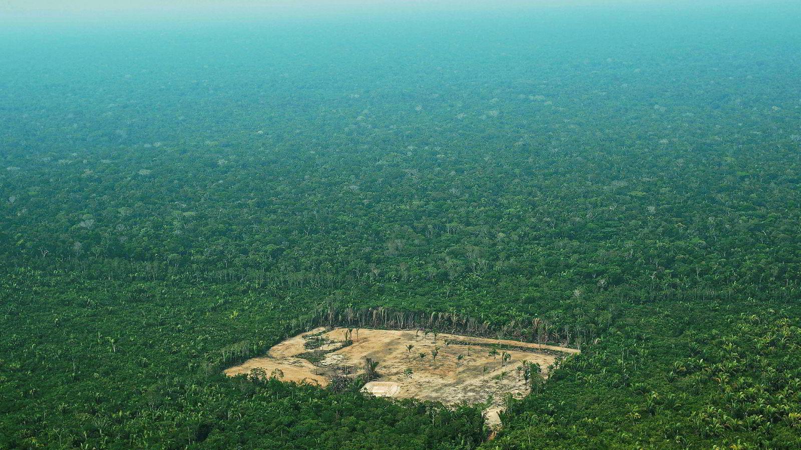 Den nye regjeringen i Brasil ruller tilbake tiltak for å bekjempe ulovlig hugst i Amazonas. Det skaper diplomatisk krøll med Norge.