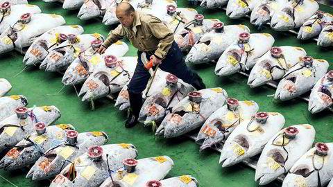 Frossen tunfisk på rekke og rad da årets første fiskeauksjon på Toyosu-markedet i Tokyo ble avholdt i begynnelsen av januar i år. En blåfinnet tunfisk på 278 kilo ble da solgt for 333,6 millioner yen, cirka 26 millioner kroner, mer en tre dobbelt så mye som den tidligere prisrekorden fra 2013.