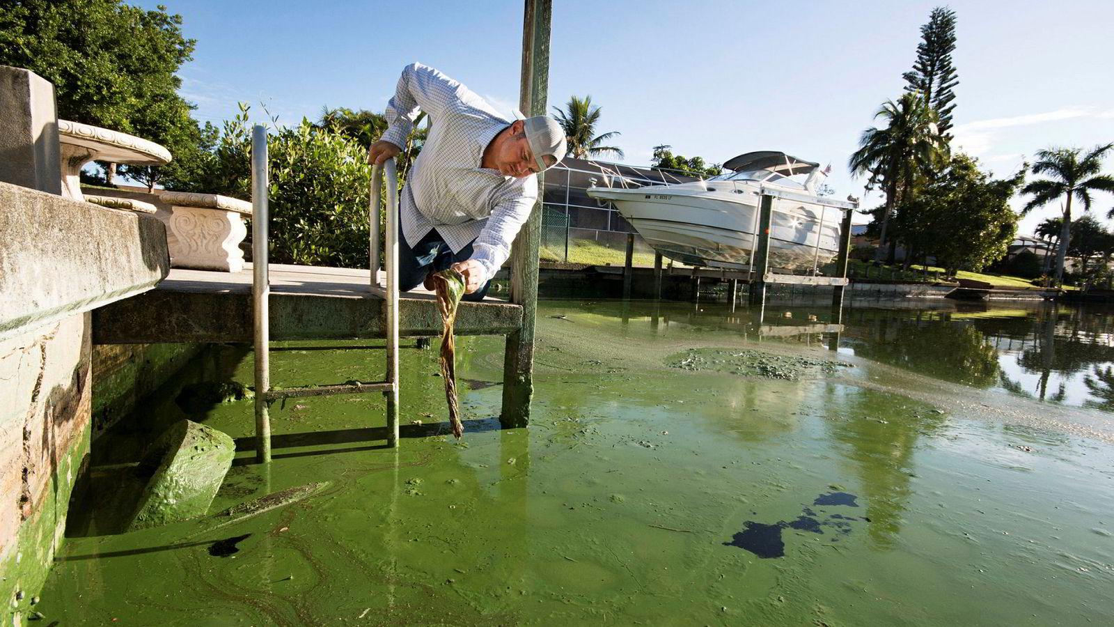 Fiskeguiden Chris Wittman i Captains for Clean Water undersøker giftige alger i en kanal i Cape Coral, Florida.