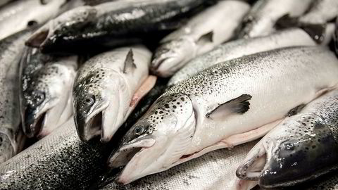 I midten av september hadde Fiskeridirektoratet mottatt 33 rapporter om rømningshendelser fra oppdrettere på om lag 280.000 laks og 2.000 regnbueørret.