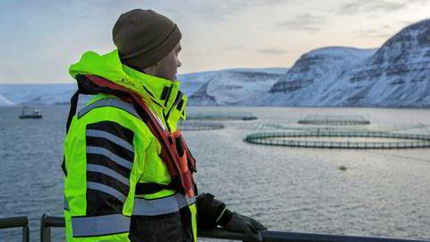 På Island er det kun deler av kysten som er åpnet for lakseoppdrett. Det meste foregår nordvest, hvor blant annet Salmar-eide Icelandic Salmon holder til.