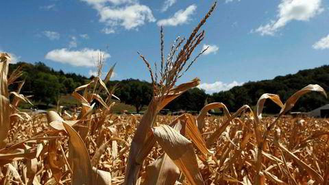 Klimaendringer vil gi både mindre matproduksjon i verden og høyere priser.