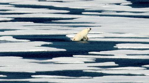 Vintrene i Arktis har stadig blitt varmere de siste årene. Foto: David Goldman/AP photo/NTB Scanpix