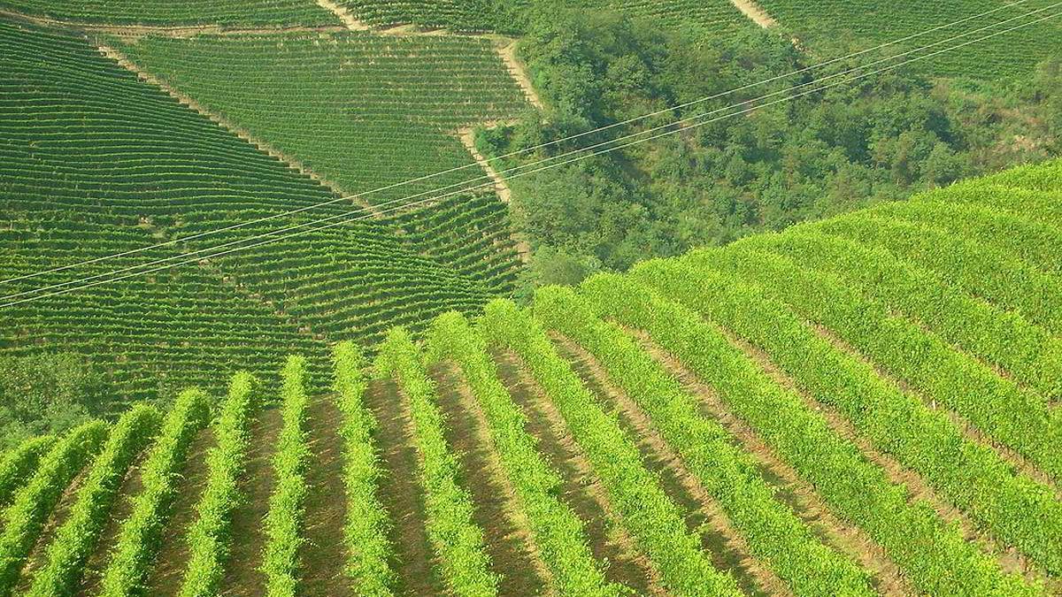 Vinmarker i Barbarseco