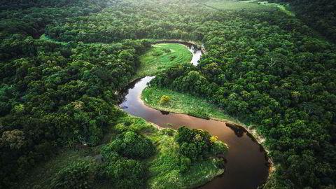 Norske husholdninger er i gjennomsnitt villige til å betale 1100 kroner årlig som en ekstra skatt til staten, øremerket tiltak som vil unngå ytterligere avskoging og artstap i Amazonas innen 2050, skriver artikkelforfatterne.