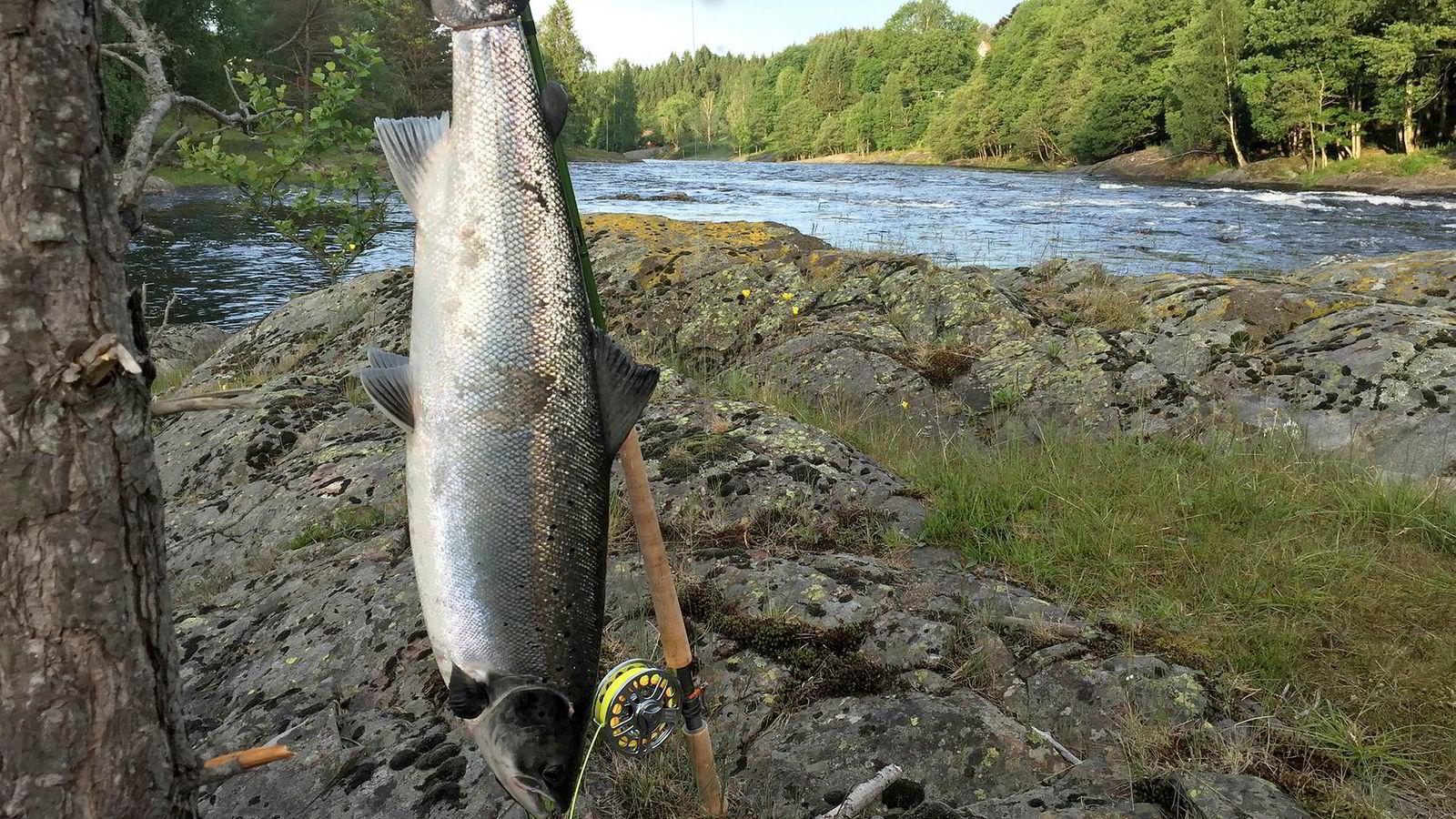 De lave fangstene av laks, sjøørret og sjørøye i norske i fjor skyldtes den varme og tørre sommeren med lite vann i mange av elvene.